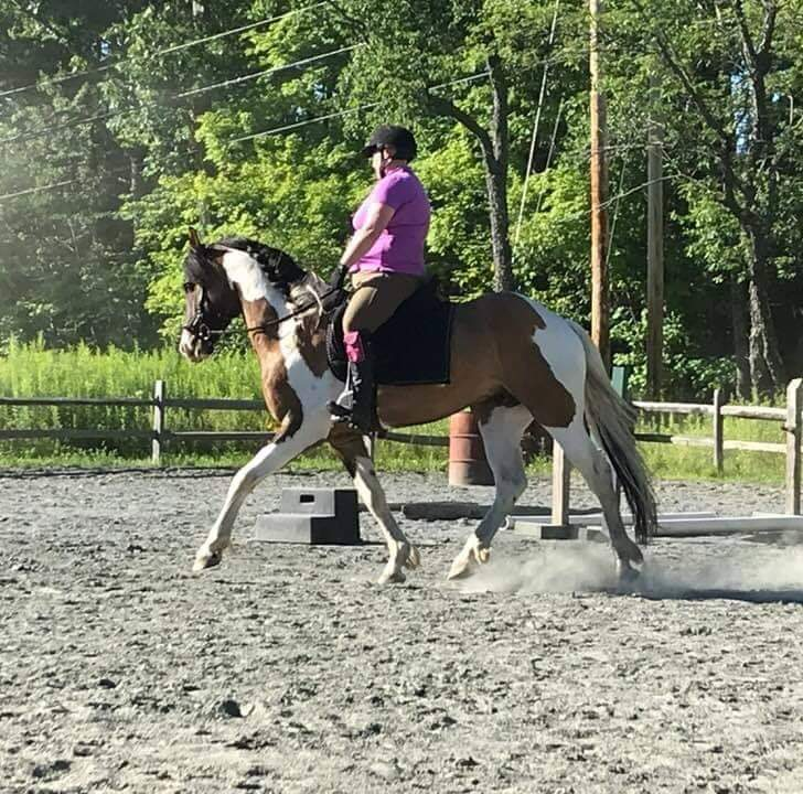 Working Equitation Obstacles Clinic - High Horses